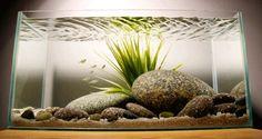 River aquascape? Copyright © George Farmer