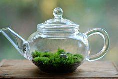 irish tea terrarium sheep in a miniature glass by weegreenspot, $45.00