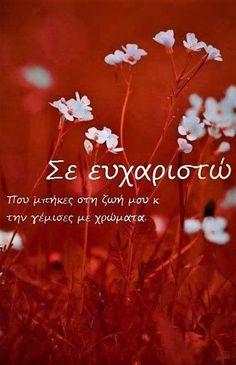 Σε ευχαριστώ πολύ ψυχή μου!  Mariah.® 🐻 Flower Aesthetic, Aesthetic Images, Picture Quotes, Love Quotes, Greek Quotes, Love You, My Love, Forever Love, Flower Wallpaper