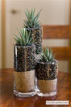 Living room on coffee table / Haworthia (Zebra Plant) -  -