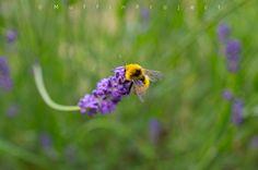 bee worker Travel Around, Bee, Nature, Plants, Animals, Animales, Animaux, Bees, Naturaleza
