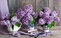 Kwiatów, Bzy, Nożyce, Książki, Bukiety