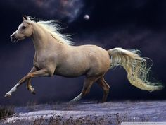 a Palomino night