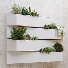 Pin from www. Wonderwall, Plant Art, Garden Inspiration, Modern Architecture, Floating Shelves, Outdoor, Plants, Home Decor, Monaco