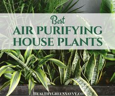 Indoor air can be up to 5X more polluted than outdoor air. To make your home as healthy as possible, get some of the best plants for cleaning indoor air!