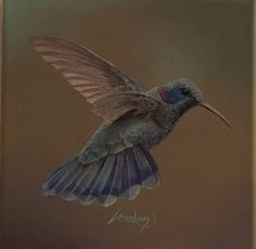 Colibri par Vorden