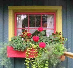 http://www.bemisfarmsnursery.com/flowers%20in%20the%20window.jpg