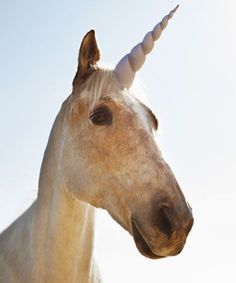 If you've ever had people tell you unicorns don't exist, let them know they're wrong. Sort of.
