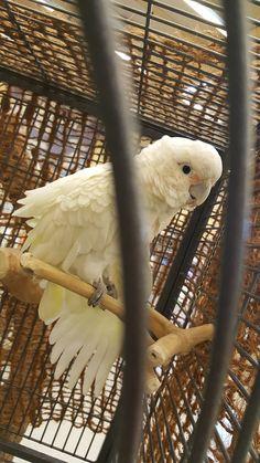 #Tier #Zoo Parrot, Animals, Parrot Bird, Animales, Animaux, Parrots, Animal, Animais