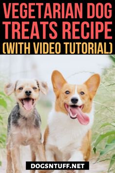 Here is an easy homemade hypoallergenic dog treats recipe/Vegetarian dog treat recipe for your allergic dog #HomemadeHypoallergenicDogTreats #VegetarianDogTreats #dogrecipes Diy Dog Treats, Dog Treat Recipes, Hypoallergenic Dog Treats, Dog Facts, Dog Rules, Dog Behavior, Training Your Dog, Dog Owners, Dog Friends