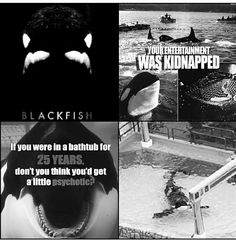 Blackfish -- I have never really cared much for Seaworld  and now I cannot support that amusement park in any way. I do hope it gets shut down one day. Something man constantly does: treating animals like products; it's all about money... Disgusting. Shut Seaworld down - free Tilly - orcas