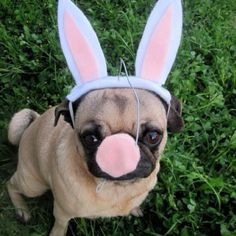 Happy Easter!!!! ...one day I will have my own!!!!!