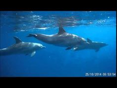 dolphin swim Dolphins, Whale, Places To Visit, Swimming, Animals, Swim, Animales, Animaux, Animal