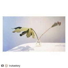 Botanical Tuesday  by elee . . . . . #flowers #flower #petal #petals #nature #beautiful #love #pretty #plants #blossom #sopretty  #flowerstagram #flowersofinstagram #flowerstyles_gf #flowerslovers #minimalist #botanical #floral #florals #insta_pick_blossom #flowermagic #instablooms #bloom #blooms #botanical #floweroftheday #sustainable