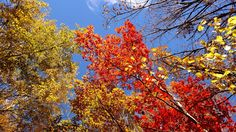 Fall through the sunroof 2