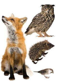 http://www.kekliving.com/wall-stickers/animals/forest-friends/