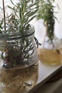 Plantes qui poussent dans l'eau