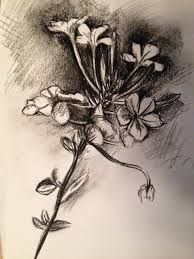 Image result for jim dine plant drawings