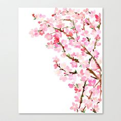 Watercolor Cherry Blossoms Stretched Canvas by Yao Cheng Design - $85.00