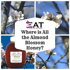 Where can you buy Almond Blossom Honey? Learn the sources for Almond Blossom Honey and why it is so hard to find? Honey Uses, Raw Honey, Types Of Honey, Almond Blossom, Learning, Almonds, Stuff To Buy, Bees, Recipes