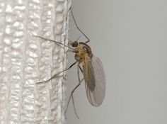 Mosquito Mosquitos humans by body heat and scent. For cookouts and outdoor parties, use insect repellant and citronella candles to protect yourself, your family and your friends.