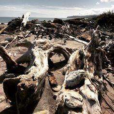 Jadesuche am Strand der Brucebay. Hier werden neben den vielen bunten auch wertvolle Steine vom Fluss angespült. Auch maches Treibholz hier könnte man sich ins Wohnzimmer stellen.