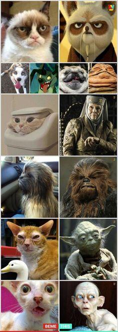 Funny Animal Jokes, Funny Animal Pictures, Cute Funny Animals, Animal Memes, Funny Cute, Hilarious, Animal Mashups, Memes Humor, Cat Memes
