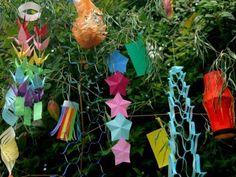 Tanabata, Plants, Asia, Plant, Planets