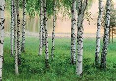 Fotobehang Nordic Forest - Bomen behang | Muurmode.nl