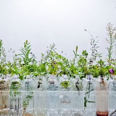 Landscape designers Earthscape have opened up their studio in Beppu, Japan, to present their experiments with growing native plants in water from local hot springs.
