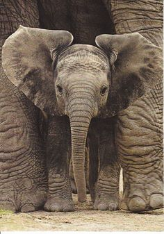 Baby Elephants!!! Look at how adorable he or she is!!!