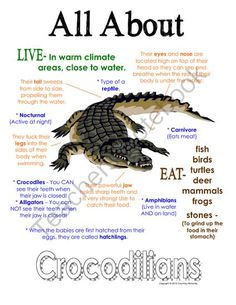 """My All About Crocodilians Book - African Animal Unit Study from Courtney McKerley on TeachersNotebook.com (9 pages)  - This """"All About Book"""" will be a fun addition to your classroom and lesson on crocodilians. This packet can be used along with books specific to the animal or it can be used on its own. Other animals you will see in the African series include Elephant, Gir"""