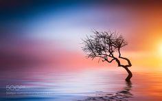 Tree at lake by Besmir