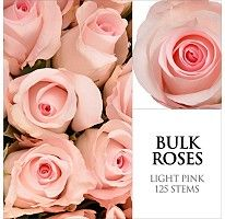 Great Idea - Sam's Club.  Roses - Light Pink - 125 Stems