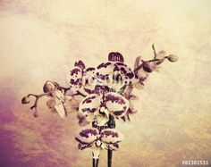 """Download the royalty-free photo """"orchids"""" created by VGF #photography #nature #orchids #orchid #flowers #floral #texture #fotolia"""