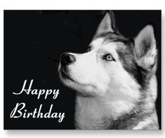 Siberian Husky Happy Birthday Post Card    http://www.zazzle.com/happy_birthday_siberian_husky_puppy_dog_post_card-239527106792489374?gl=alwaysdogs=238669615131463341