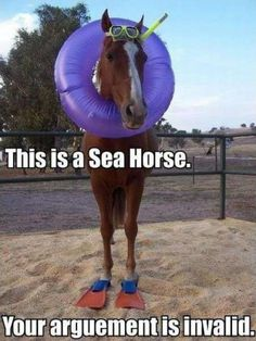 This is a sea horse. Your argument is invalid.