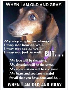 My lovely pooch.... I will always love you.