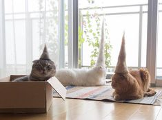Cats wearing hats made from their own hair. —