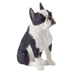 Sandicast Small Size Boston Terrier Sculpture - SS19305
