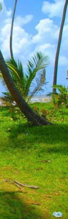 #caribbean #caribbeanhomes #interiors #houseandgarden #tropicalhouses #tropicalliving #troipcaldesign #travel #floraandfauna #lifestyle #trinidad #portofspain #mayaro