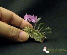 orquideas miniaturas fotos - Buscar con Google