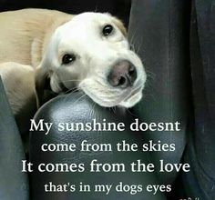 You are my sunshine,my only sunshine.....