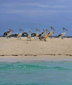 Sight seeing pelicans, white sands and a lot of sun. For booking Send email to : supervictory.travel@gmail.com