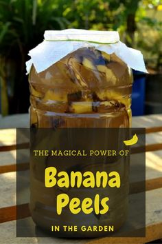 Banana peels are a good source of nutrients—as most kitchen scraps are—and that's why they are all a welcome addition to our compost piles. Fresh banana peels contain roughly 19 mg of calcium, supp… Home Made Fertilizer, Fertilizer For Plants, Liquid Fertilizer, Banana Peel Uses, Banana Peels, Compost Tea, Garden Compost, Kill Weeds Not Grass, Orchid Plant Care