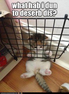 Jailed kitty http://cheezburger.com/9088652288