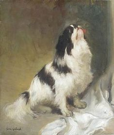 Japanese Chin or Japanese Spaniel kennel From Moony's Faith Animal Paintings, Animal Drawings, Cute Puppies, Cute Dogs, Dog Information, Japanese Chin, Interesting Animals, Pekingese, Baby Dogs