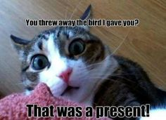 That was a present!!!