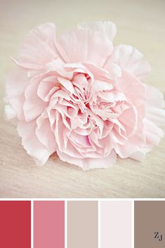 ZJ Colour Palette 500 #colourpalette #colourinspiration