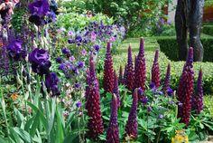 De blå og violette farver er de mørkeste i farvecirklen. Når vi taler om sorte blomster, er deres farve ofte meget mørkt blåviolet eller purpursort. Helt mørkt violet blomster er utroligt smukke og iøjnefaldende. Her ses en bedkombination fra Chelsea Flower Show 2015. - Fotograf: Louise Møller.